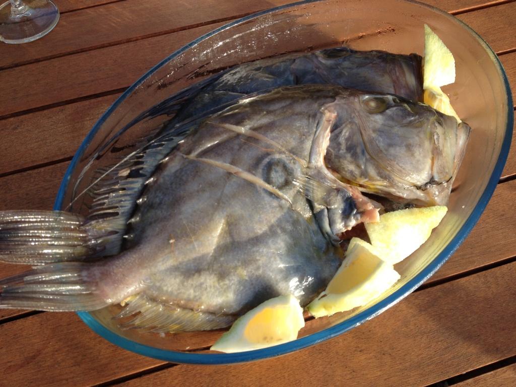 ... zum Beispiel diese schönen Petersfische