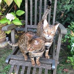 Zwei Katzen (oder mehr)