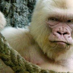 Warum ich kein Vegetarier bin und Zoos nicht mag