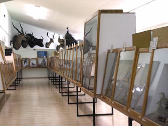 museu-ciencies
